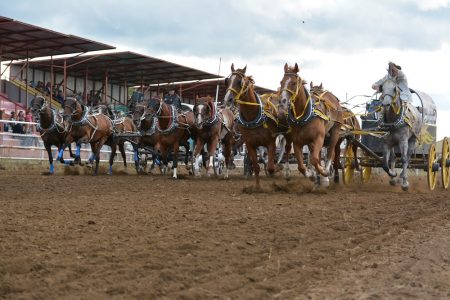 Battle River Rodeo 5