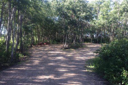 Northern Timbers 1