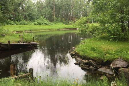Northern Timbers2