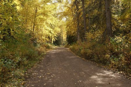 11 November Janice Nemecz Winding Road Notikewin Park